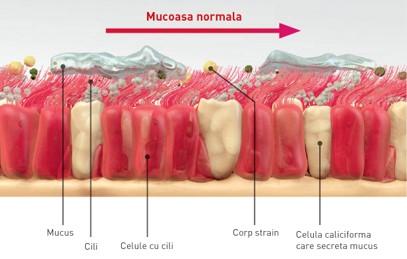 Mecanismul de auto-curățare al căilor respiratorii